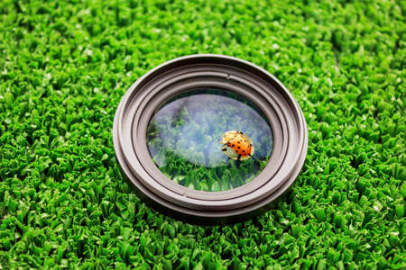 Closeup of Lady bug on lens camera with lawn background Stock Photo