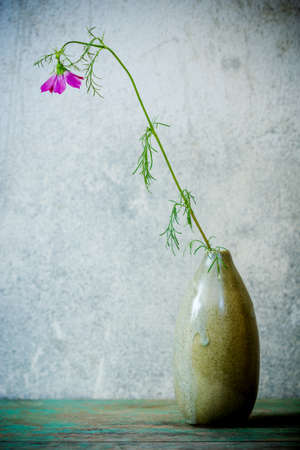 Still Life with  pink cosmos flower in vase photo