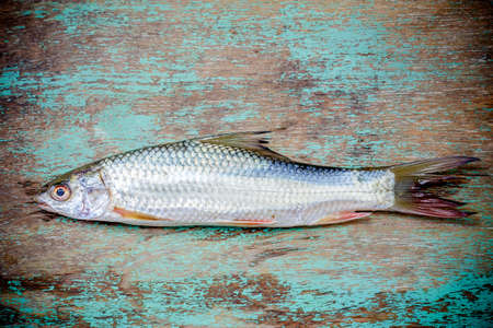 fish on wooden background, fish over natural wood background photo