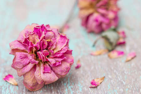 dried roses over vintage background dry roses photo