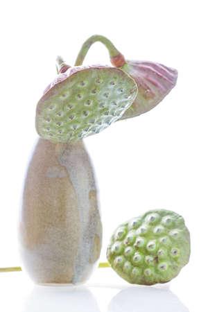Lotus seeds in vase isolated on white background photo