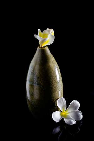 champa flower: frangipani flower in vase isolated on black background