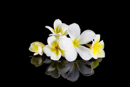 frangipani flower isolated on black background photo