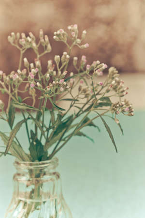 Grass flowers in glass bottles vase, selective focus photo