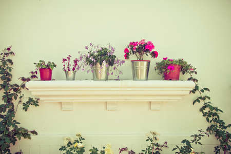 Buckets of flowers and Flower Pots in the garden photo