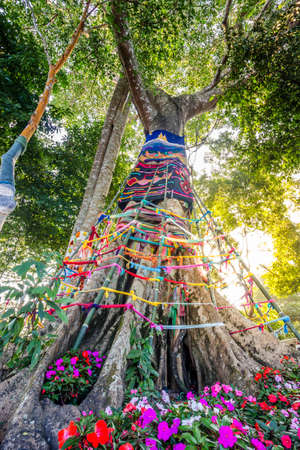 Three fabric color wrap the old tree, the belief in thailand, Holy tree with spirit inside in Asians belief photo