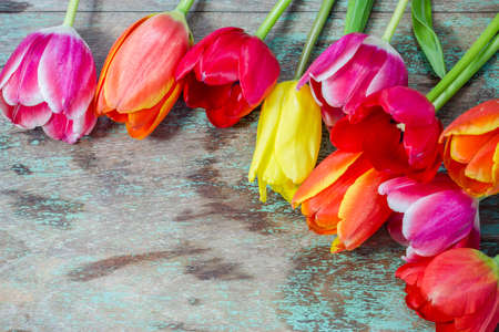 colourful tulips on a wooden background with space for text Stock Photo