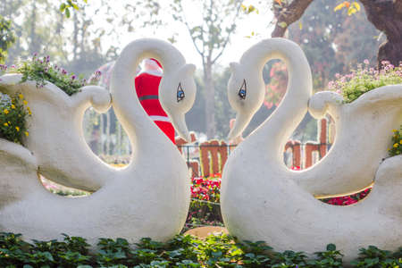 Two swans in love with swan flower pot photo