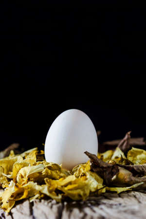 White egg on dried rose, egg on black background photo