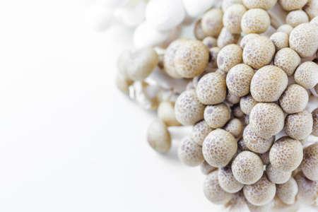 hon: Fresh brown beech mushrooms or shimeji mushrooms on white background