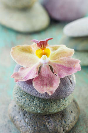 zen rocks: spa concept with zen stones and orchid on wooden background Stock Photo