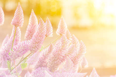 filters: Beautiful flowers made with color filters, flower background. Stock Photo