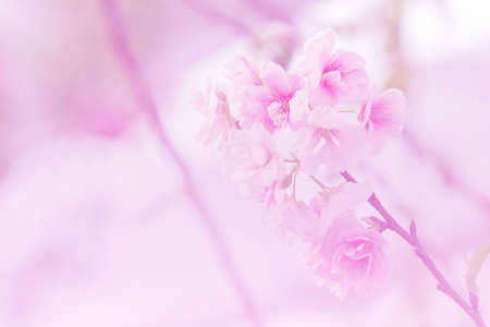 colorize: Beautiful flowers made with color filters, flower background. Stock Photo