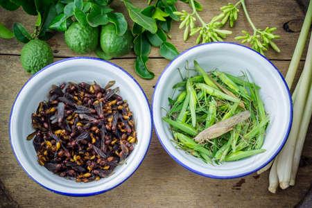 grasshopper: subterranean ants and grasshopper in iron bowls