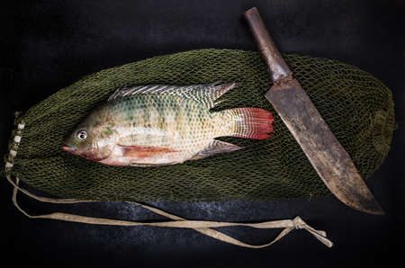 gray backgrund: fresh tilapia fish on black wooden backgrund. Stock Photo