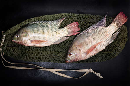 fresh tilapia fishes on black wooden backgrund. Stock Photo