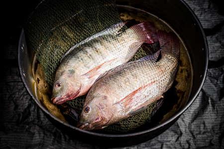 nile tilapia: Fresh tilapia or nile tilapia in pot