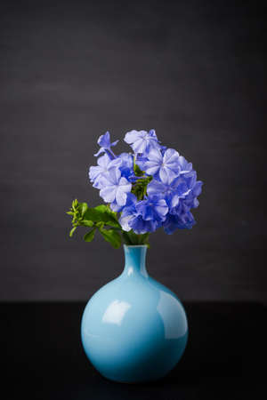 auriculata: Blue plumbago flowers in vase (Cape Leadwort or Plumbago auriculata) on wooden table