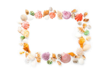 Frame with seashells on white background. Sea flat lay for mock up. top view