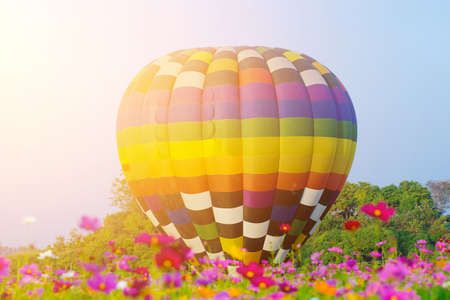 Hot air balloon flying over cosmos flowers fields