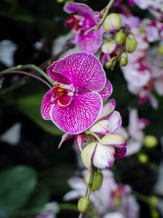 Beautiful many orchid flower in the garden Stock Photo