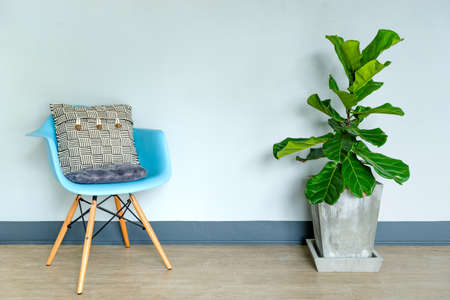 Fiddle leaf fig tree on natural light living room