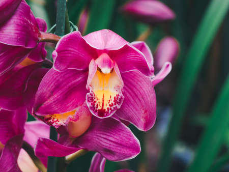 Beautiful many orchid flower in the garden 写真素材