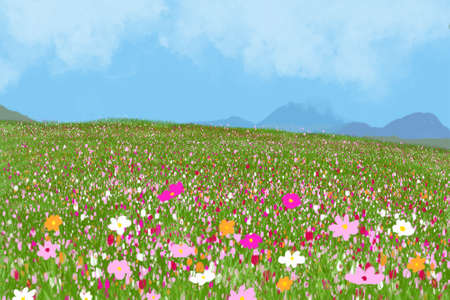 Beautiful cosmos flower in field with blue sky.