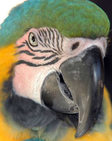 a close up of an exotic colorful parrot