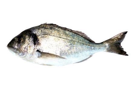 sea bream: Sea Bream Fish