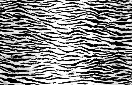 Zebra Print Reklamní fotografie