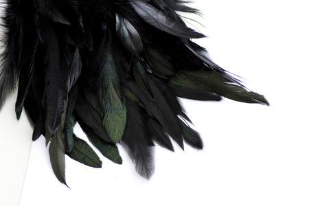 black plumage: Feather Background