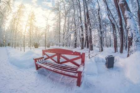 Bench in a winter park on a sunny day. fisheye distortion lens Stok Fotoğraf