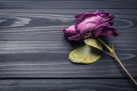 faded single rose on a dark wooden background