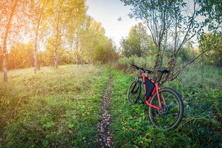 bright bike in the forest in autumn, distortion perspective fisheye lens view