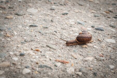 the small snail on old asphalt close up Imagens