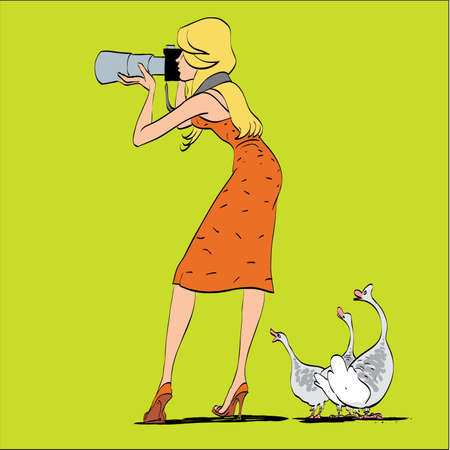 wildlife shooting: Girl photographer and geese in nature. Shooting wildlife. A humorous scene. The woman photographer Illustration