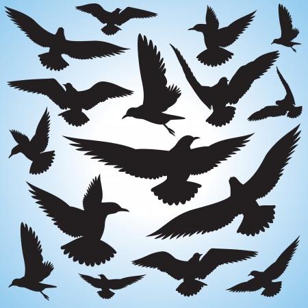 flock of flying birds and sky Stock Vector - 17762356
