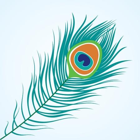 pluma blanca: Vector aislado pluma del pavo real