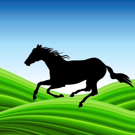 horse on outdoor   Stock Photo - 17680805