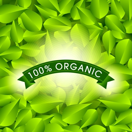 Eco Friendly label  Green leaves   illustration  Vector