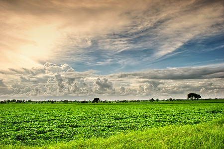 image of sunset over agricultural field photo