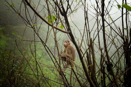 A monkey sits on a tree in India.