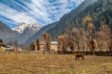 A Horse Grazing at Foothills of Himalaya Mountain, Kashmir, India