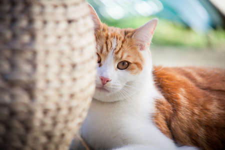 young ginger cat enjoying himself in the garden Stockfoto