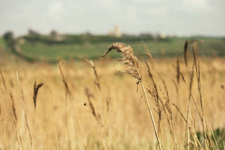 closeup photo of dry grass in the field