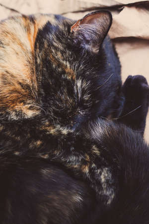 pretty tortoiseshell cat having a nap on a pile of cardboard in the garden Stock Photo