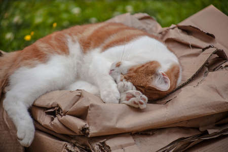 cute ginger cat sleeping peacefully in the garden