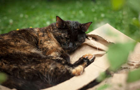 young tortoiseshell  cat sleeping on a pile of cardboard next to catnip