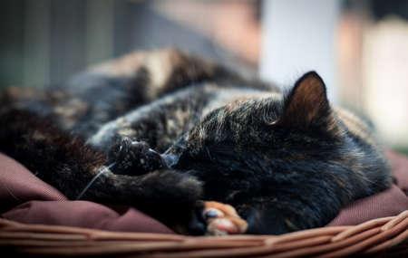 closeup photo of a cute tortoiseshell cat in a wicker basket